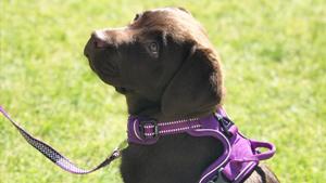 puppy socialisation classes cambridge
