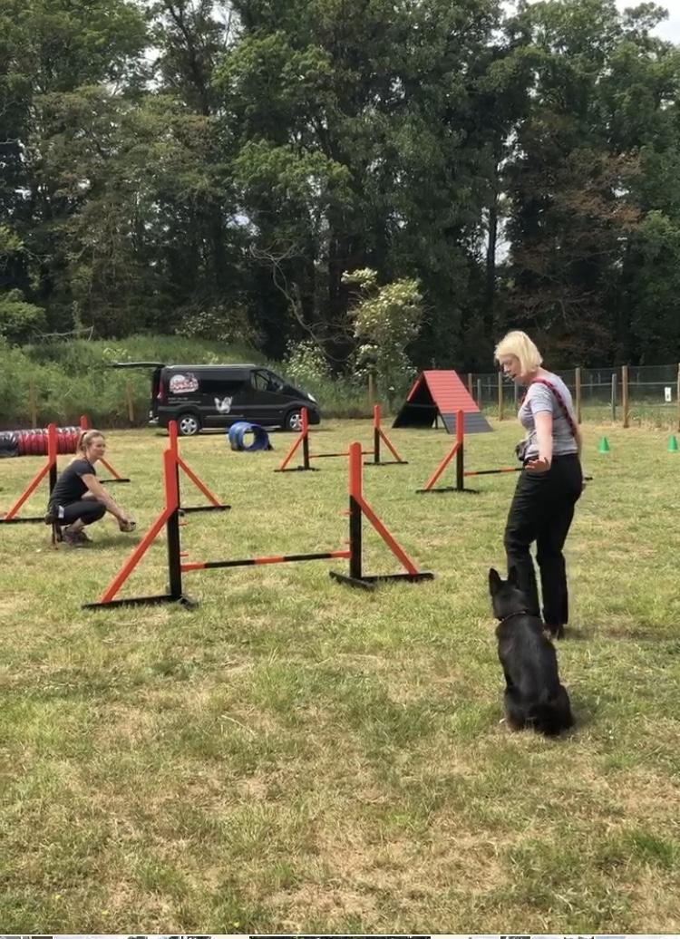 dog agility - Bartlow