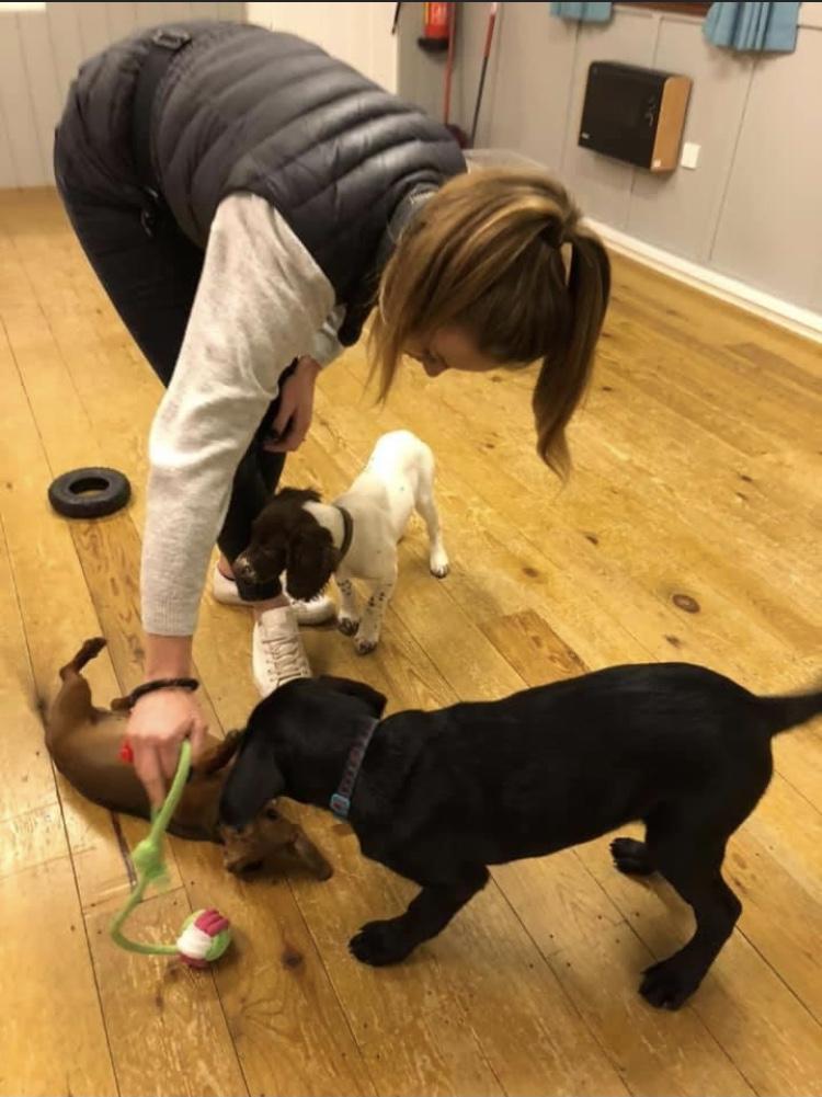 puppy training Cambridge