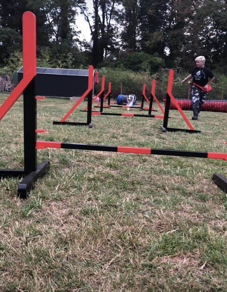 dog agility - Cambridgeshire