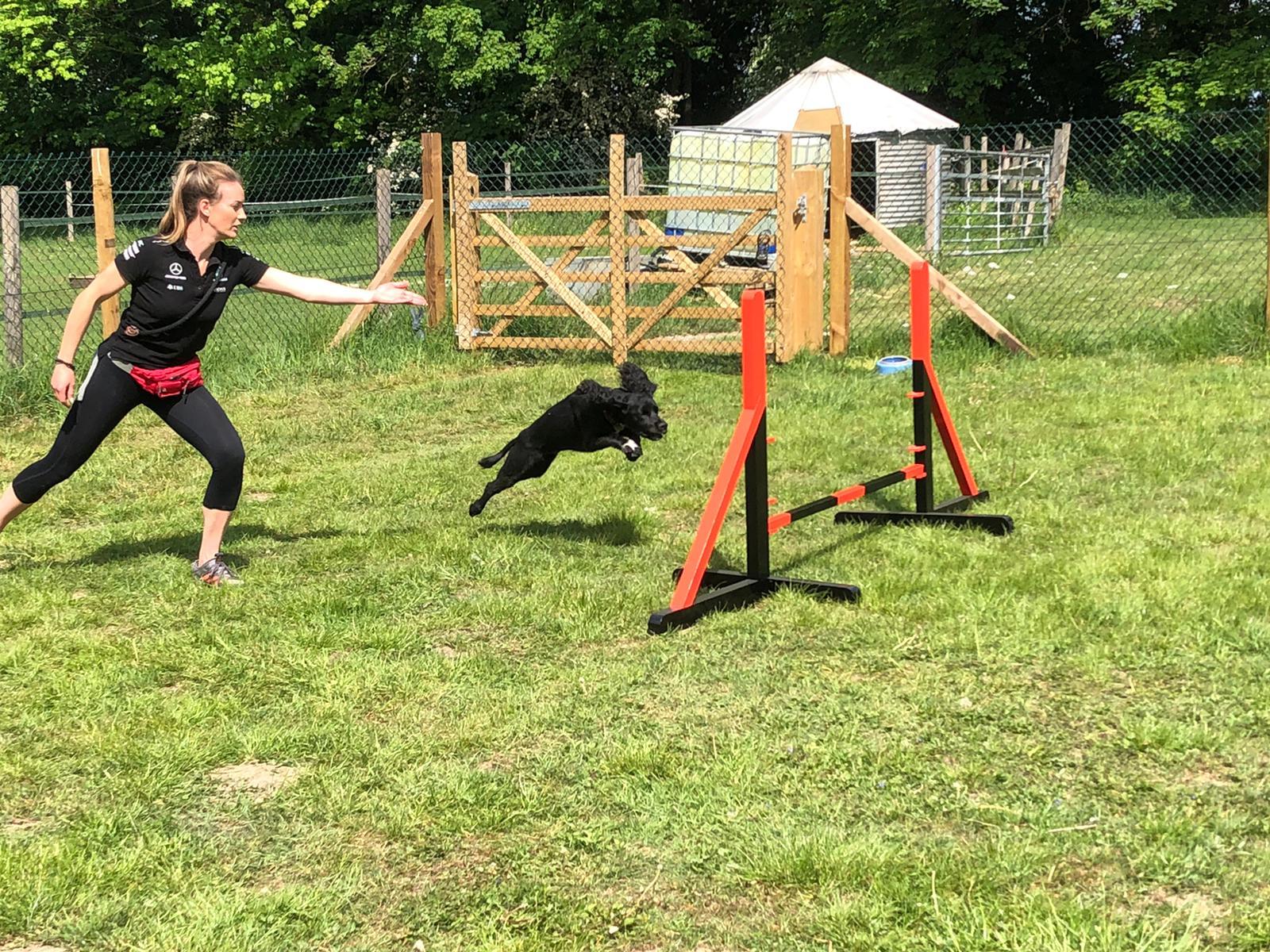 dog agility - Linton