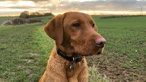 dog training classes cambridge